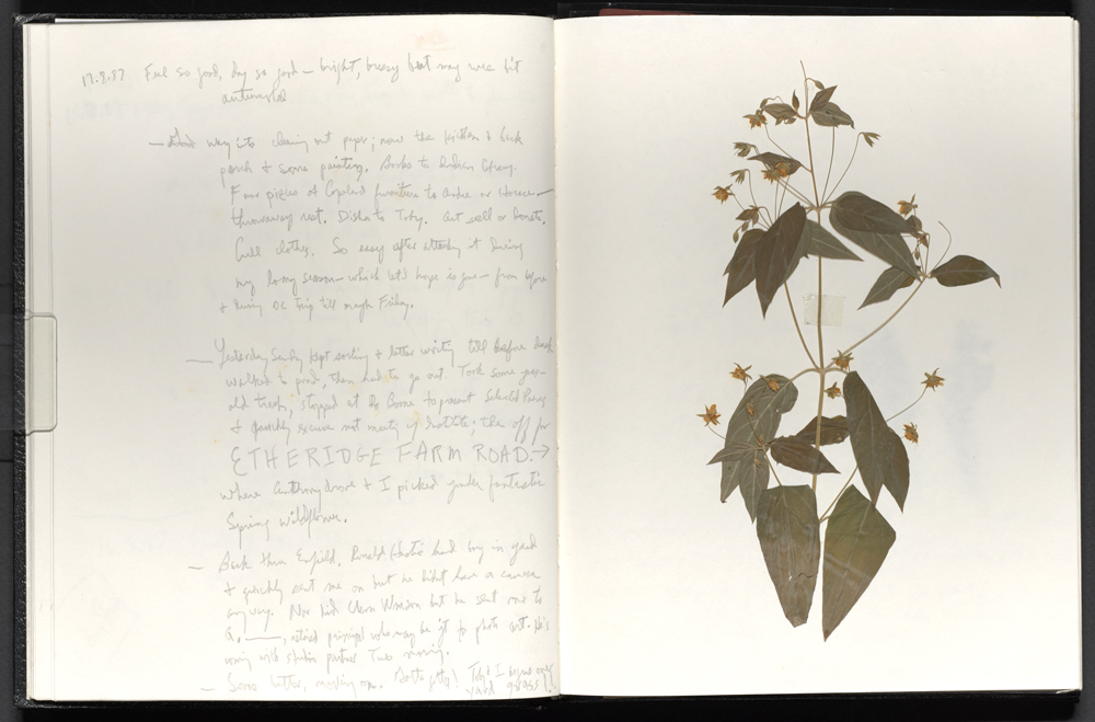 Leaves preserved in the pages of a notebook.